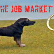 re enter the job market